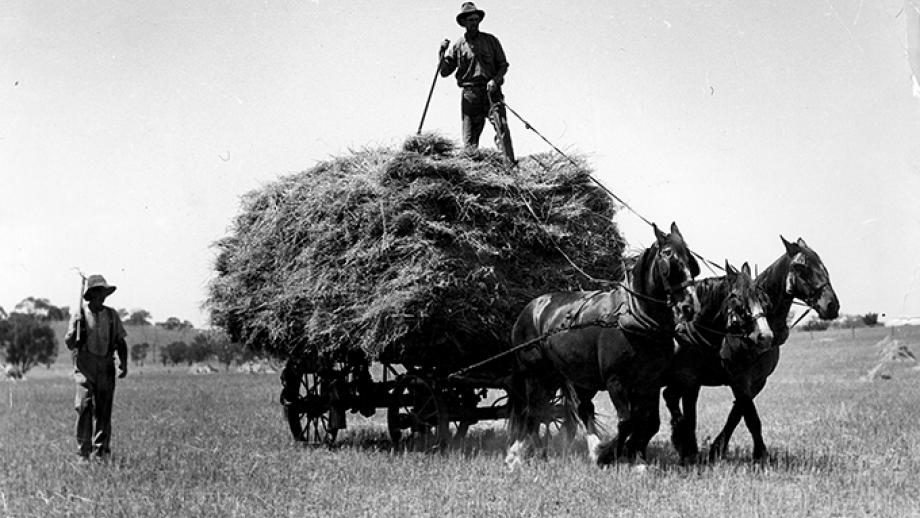 Hay carting on Hallinan Brothers' property near Cootamundra, New South Wales