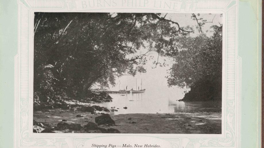 Shipping Pigs- Malo, New Hebrides