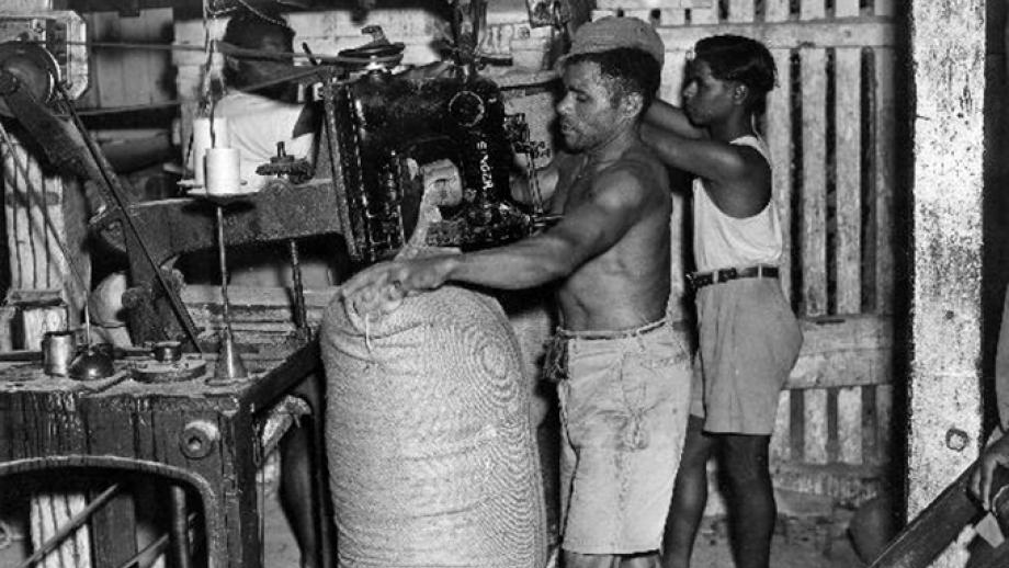 Sewing sugar sacks at Nausori Mill