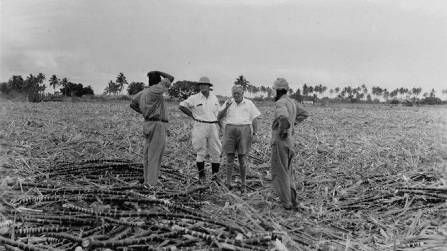 Field officers discussing cane cutting with Indian sirdars at Wainibokasi, Nausori