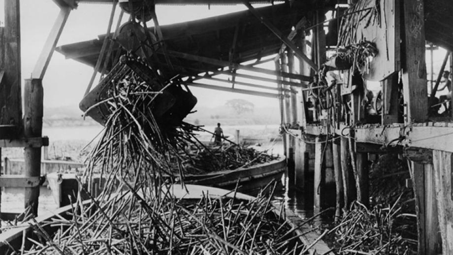 Mechanical grab unloading cane from the punts, Nausori Mill, 1947